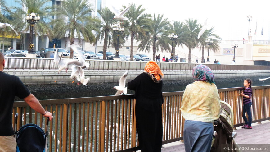 В киосках Аль Касбы продаются пакетики с кормом для чаек. Можно купить такой пакетик и покормить птиц прямо с рук. Такое кормление превращается в целое шоу!