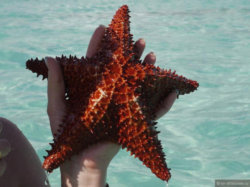 Обязательная остановка на песчаной отмели, где огромное количество морских звёзд.
