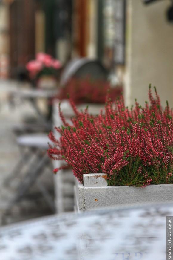 В ноябре в Братиславе цветут цветы...