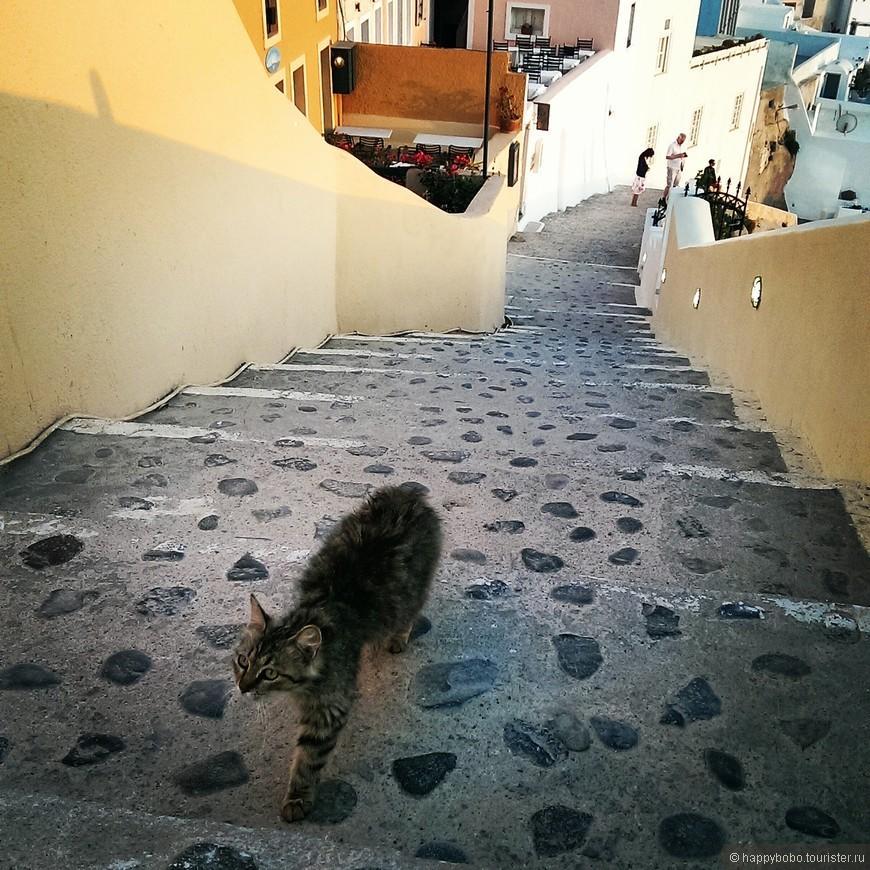 котики в Греции повсюду. Живут в райском местечке