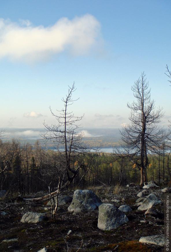 Судя по всему, здесь был сильный пожар... Потому и деревья такие...