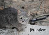 Иерусалим: Стена Плача