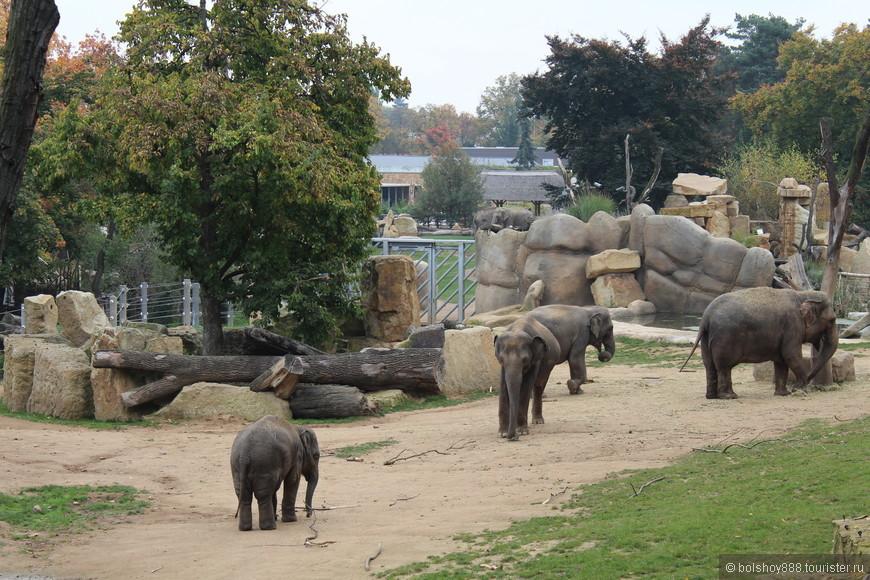 Очень хороший вольер  у слонов.Красиво и просторно.