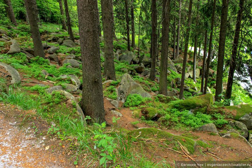 Говорят, в мистическом лесу Харца до сих пор водятся ведьмочки. Так что осторожно...