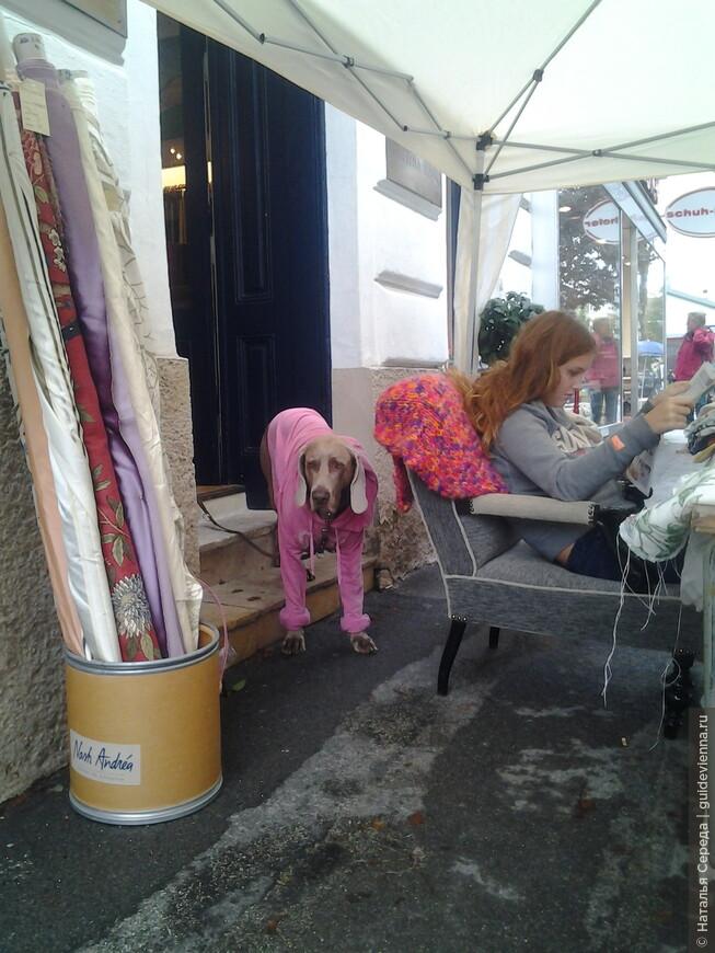 собаки в Вене