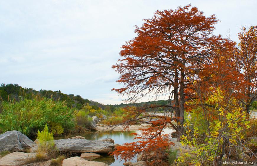 Эти деревья называются в Аризонские кипарисы. Правда в Техасе их зовут Лысыми Кипарисами. Это в Аризоне они аризонские. Лысые видимо потому что они, одни из не многих в этих бесснежных краях, не являются вечнозелеными и сбрасывают иголки на зиму.