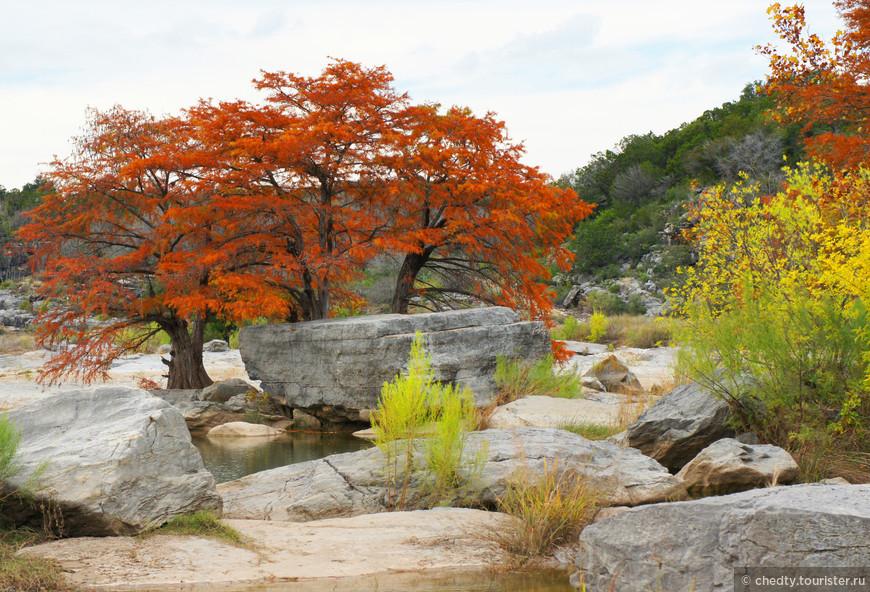 Главная задача оплести покрепче корнями большой камень, который не может сдвинуть или перевернуть течение.