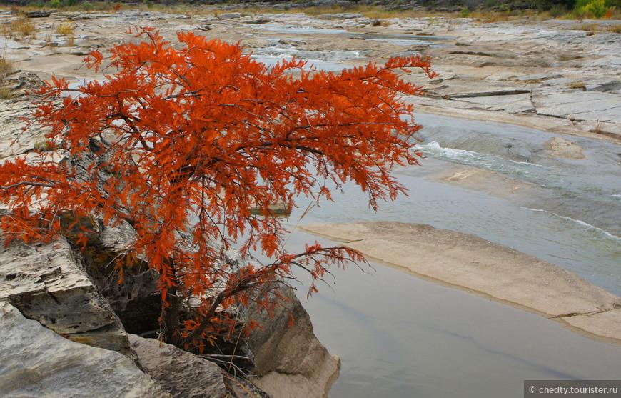 Цвет иголок осенью может быть от желтого до алого. Вон этот молодой как нарядился.
