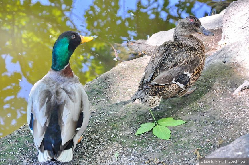 28. Фауна тоже представлена, в пруду множество рыб, выращиваются лебеди, утки, есть и животные побольше, но в вольерах.