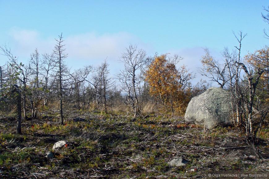 И вот начались какие-то загадочные пейзажи... Деревья здесь почему-то были голыми...