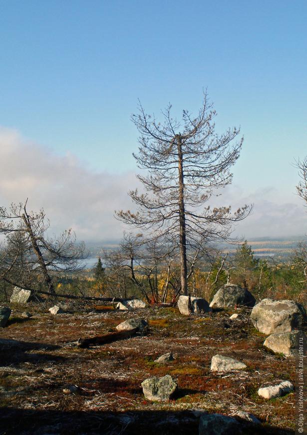 Мало того, стали попадаться очень странные деревья... В общем, вот оно, - дорвались, наконец, - здравствуй, аномальная зона! )))))