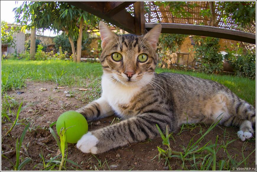 Кошки - неизменный атрибут острова.