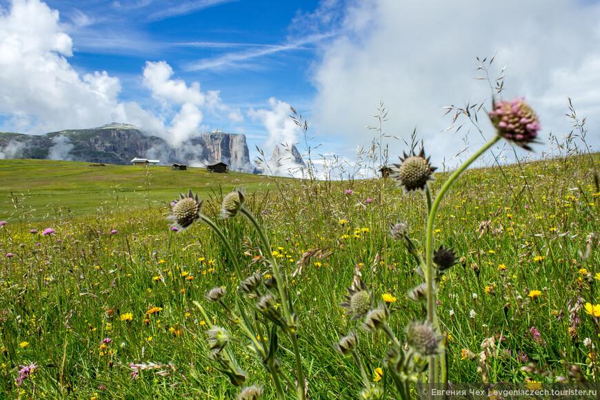 Здесь произрастает более 600 видов растений