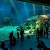 У 3000 рыб и морских животных из старого океанариума в Шарлоттенлунд  появилось много новых друзей в Голубой планете. Они будут объeденены с 17000 !!! вновь приобретенных животных со всего мира.