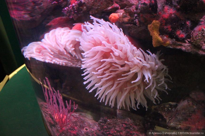 Да) и такие дивные обитатели живут в океане)