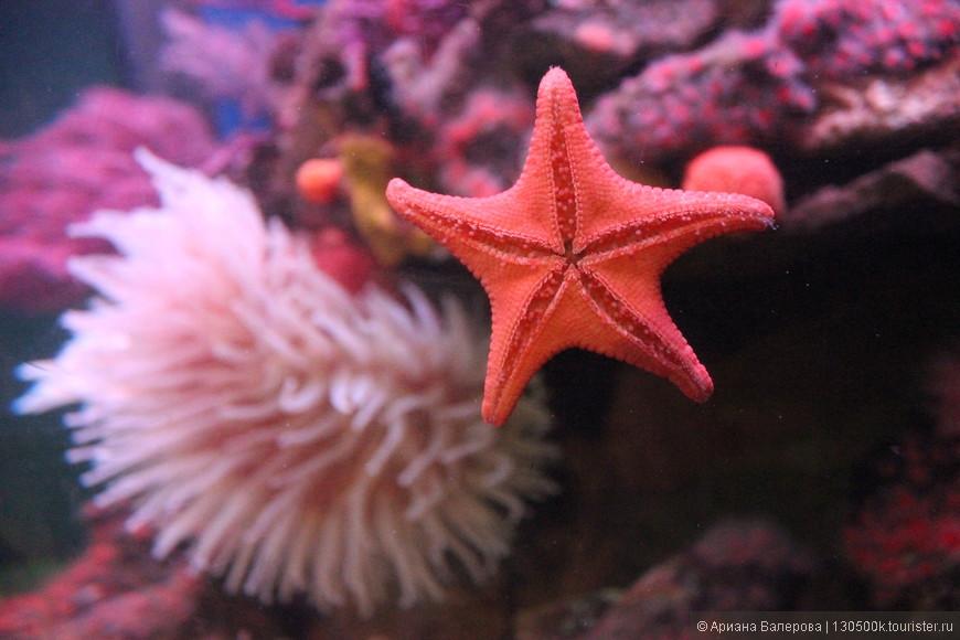 морская звезда в полете))) океанариум Pacific (Long Beach) CA