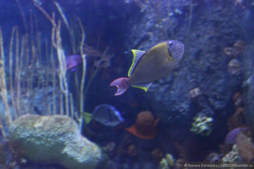 чудные обитатели океанариума Pacific (Long Beach) CA