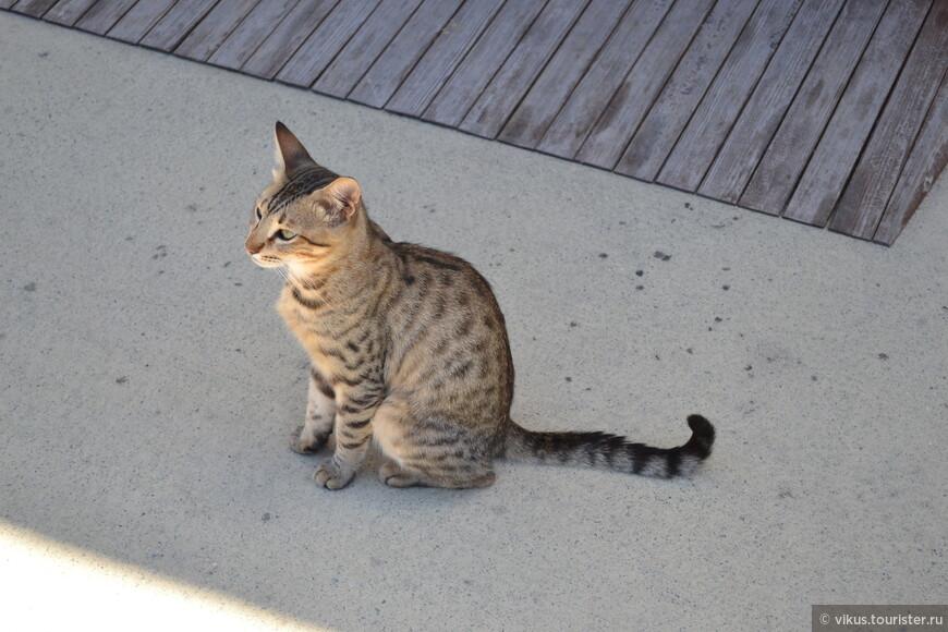 Ну и какой же Кипр без кота ).