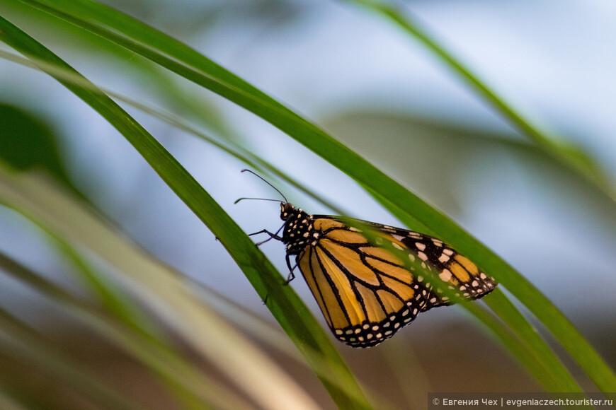 Порхание бабочки секс