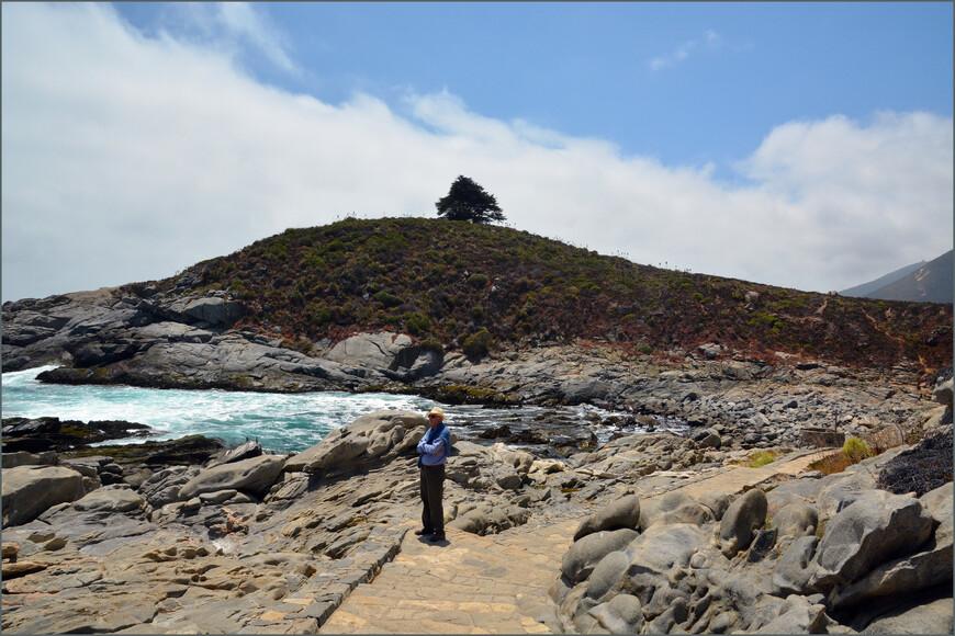 Холм Cerro de la Cruz с одинокой сосной на его вершине.