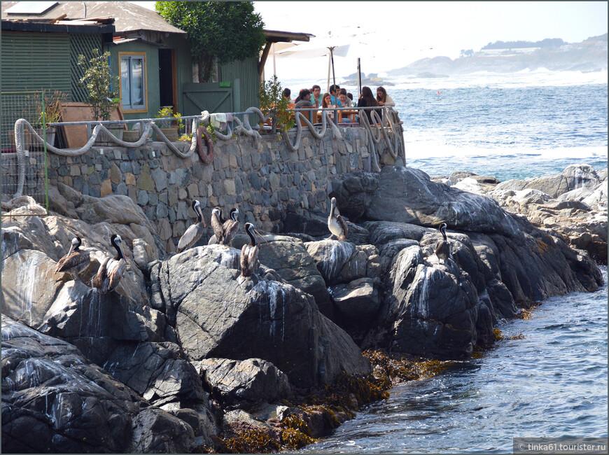 Обед с видом на океан в  компании с пеликанами.