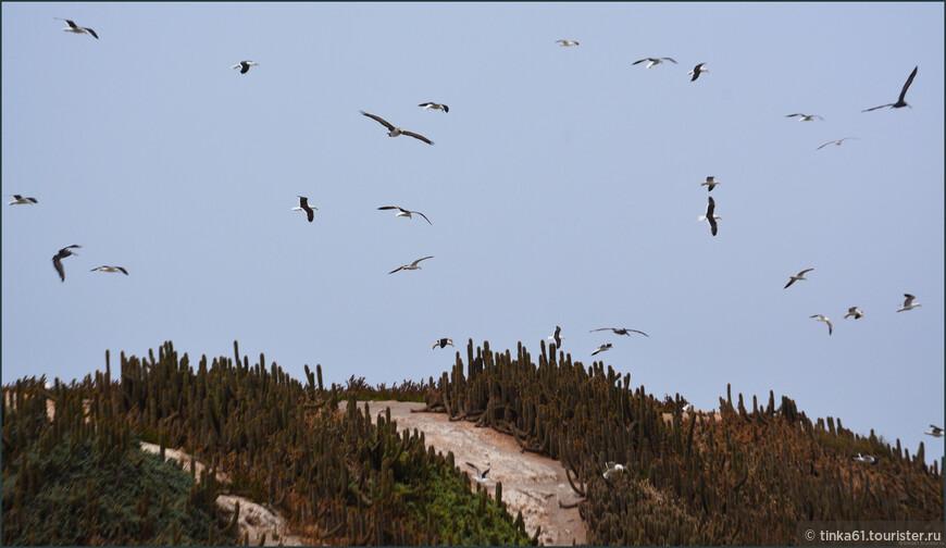 Над островом постоянно парят пеликаны и чайки.
