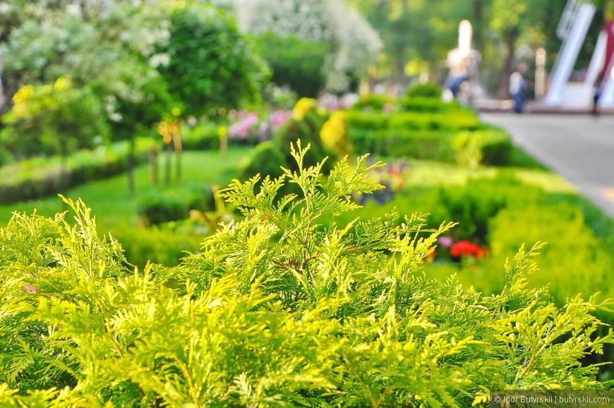 07. Туя растет в парке, вот вам и юг…