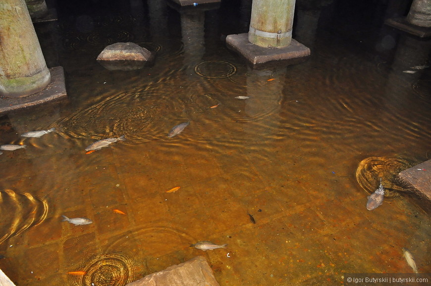 03. В воде плавает множество рыб, их совершенно не напрягают толпы туристов.