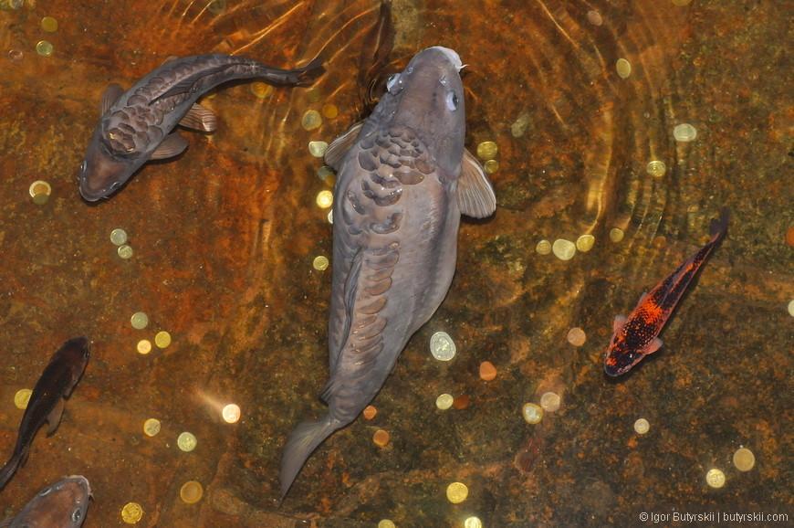 10. Одна из местных игр – попади монеткой в рыбу.