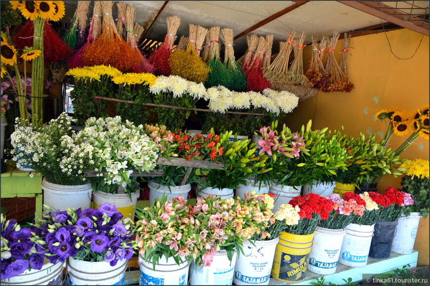 Посёлок Hijuelas   носит громкое звание Столицы цветов. Здесь много теплиц, где их выращивают.