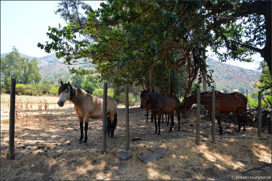 Повсюду лошади. Кое-где можно на них покататься за умеренную плату.