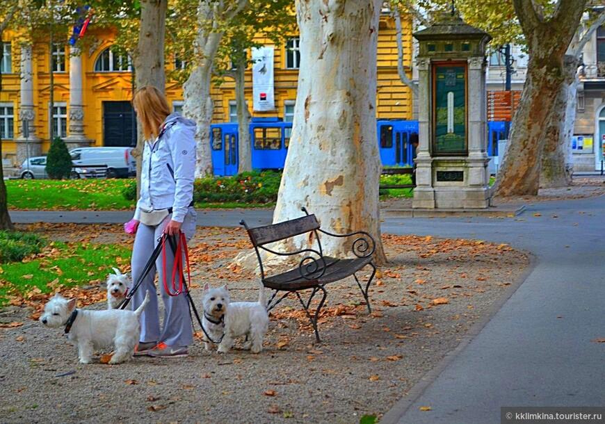 Сразу три собаки - это так по-хорватски.