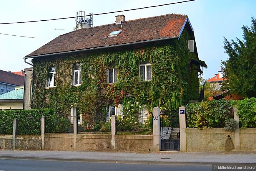 Часто можно встретить дома полностью покрытые зеленью.