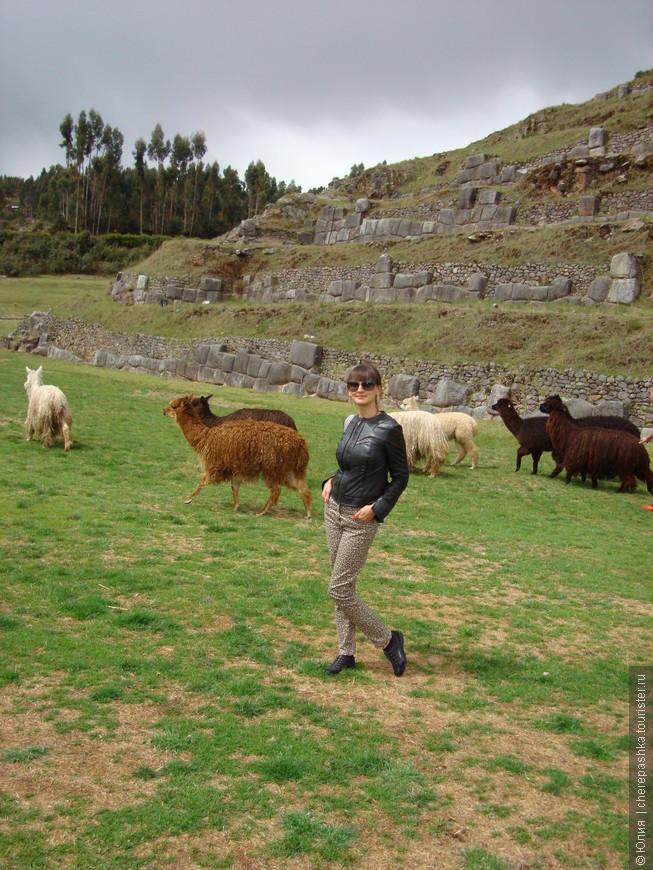 И эти прекрасные и красивейшие Альпаки, совсем рядом, как овечки на пастбище ))))