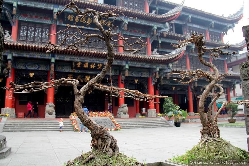 танцующие деревца, они словно застыли, а как красиво!!!