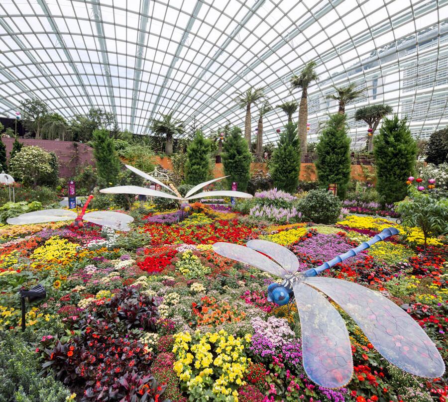 пегасистер цветы будущего картинки арабам