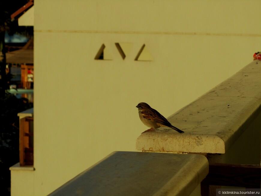Проживали на нашем балконе.