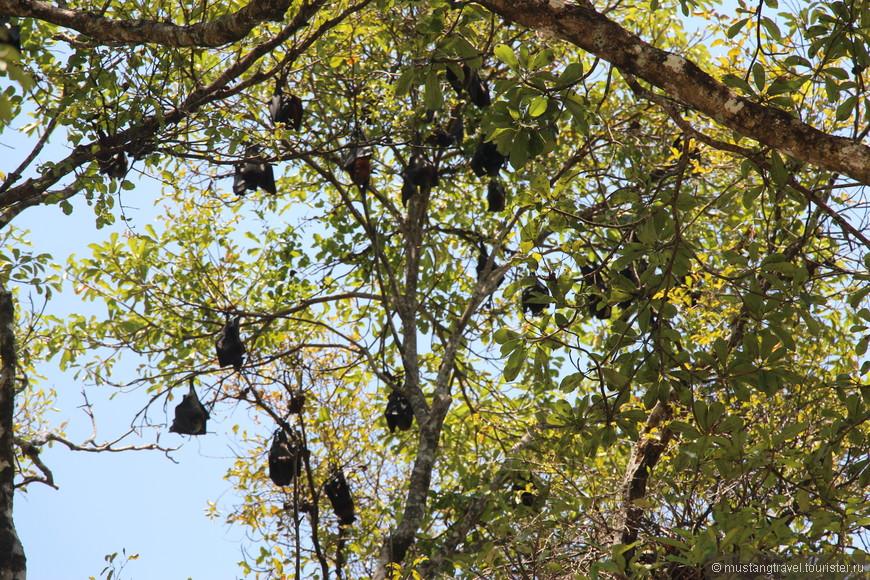 Место отдыха летучих мышей