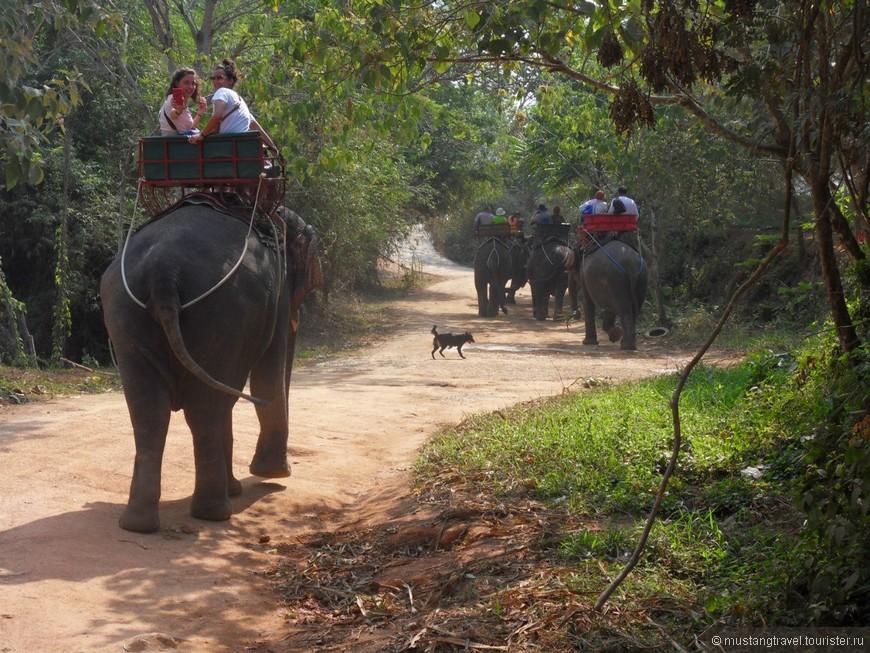 продолжение экскурсии -прогулки на слонах
