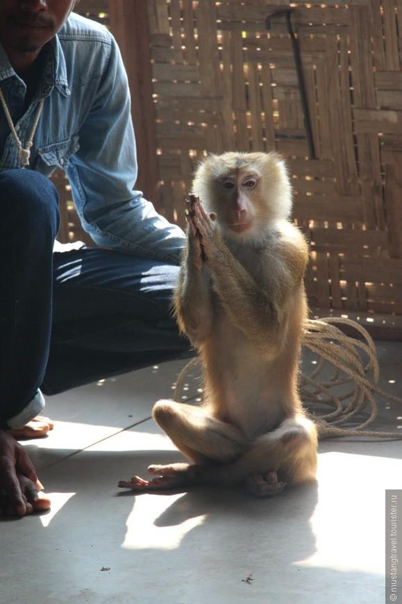 Шоу с обезьянами- Джонни медитирует