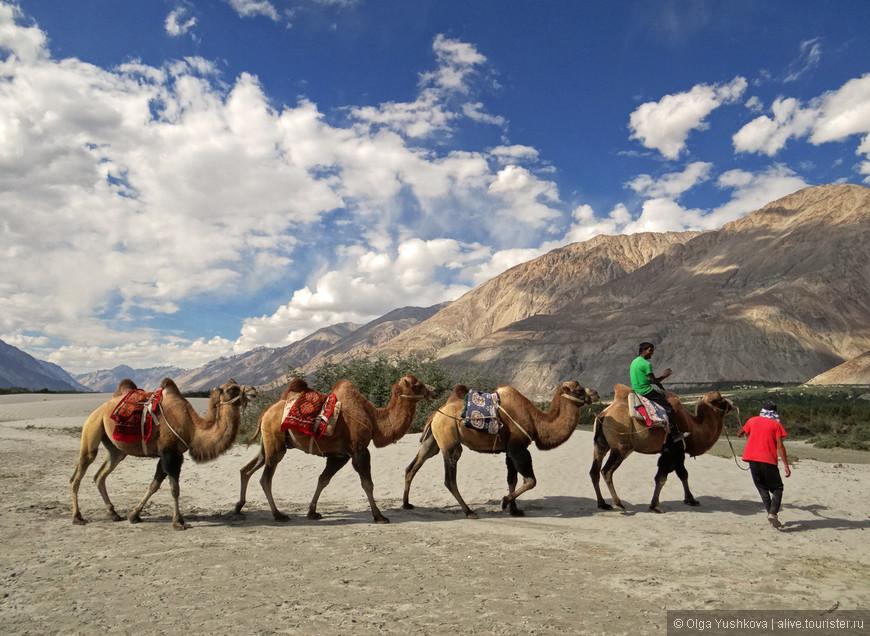 У каждого верблюда есть своё имя... А главный предводитель верблюдов даже знает несколько фраз по-русски... )))))