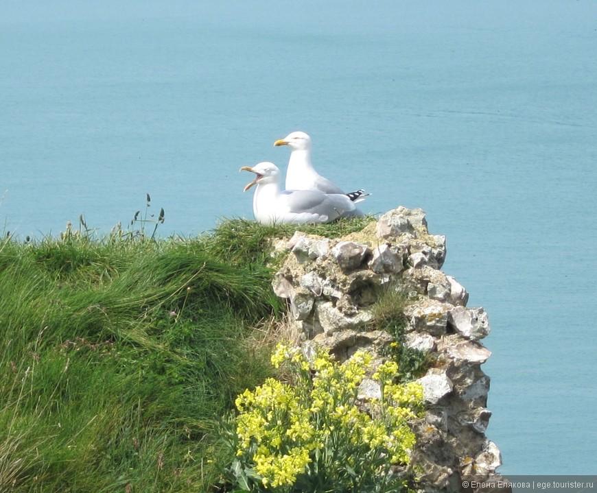Чайки на скалах