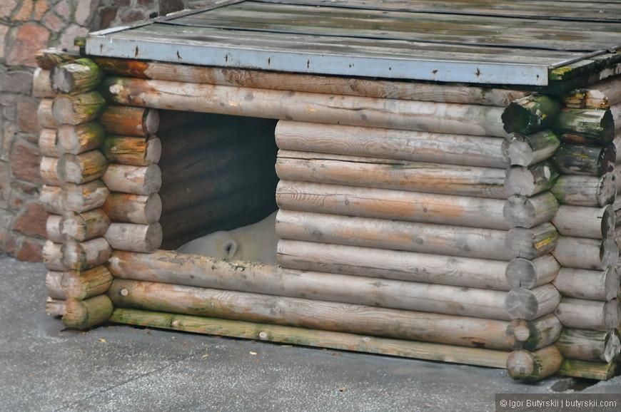 03. Домик из сруба для медведя, также у него есть бассейн, качели, покрышки и крытая отапливаемая клетка в общем здании со свободным проходом для медведя.