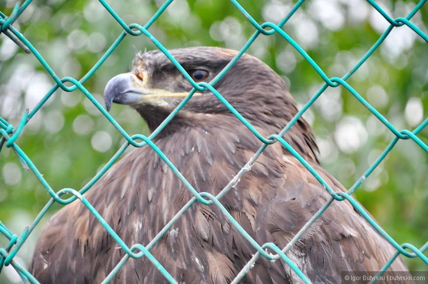 07. Но птицы даже в таких условиях гордо выглядят.