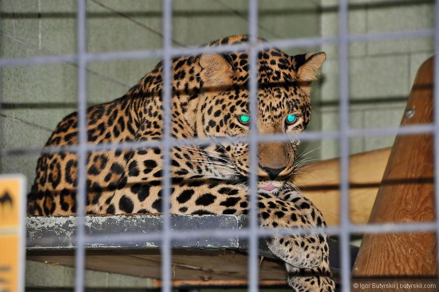 09. Кошачьи сидят в клетках в общем зале, у них есть возможность выходить на улицу, но дверь открывается по расписанию.