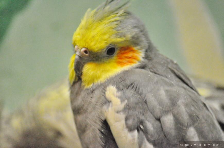 25. Также в основном помещении находятся попугаи разных пород.