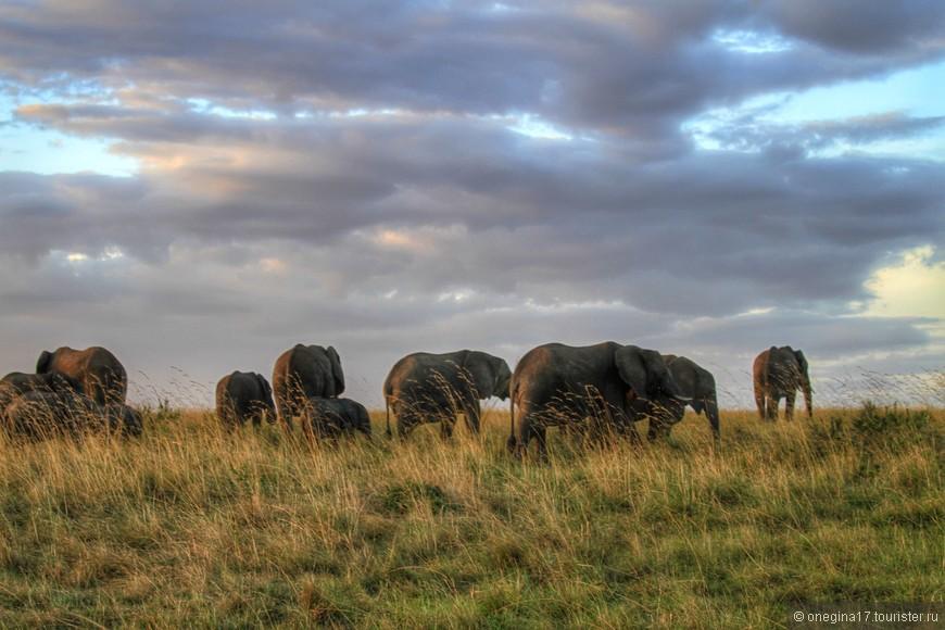 Масаи-Мара. Каждый вечер слоны уходили за горизонт. И эта картина - и есть та Африка, что осталась в моем сердце...