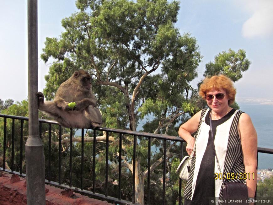 Я правильно себя веду - нахожусь на расстоянии от обезьяны (тем более, что она ест). Я видела, как одна дама довольно близко подошла к макаке, та на нее внимательно посмотрела, а дама подошла еще ближе и дотронулась до лапы и... тут же получила пощёчину!