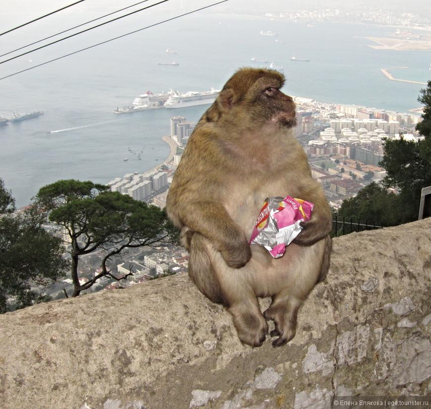 Как вы могли догадаться, эта обезьяна  - моя любимая. Она сидела на самом верху, чипсы уже съела, но с пакетиком не рассталась.