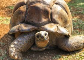 Ванила-парк. Место, где нескучно и детям, и взрослым! Здесь можно кормить черепах, погладить их панцирь, погулять среди них, обнять их и послушать, как страшно они умеют шипеть...